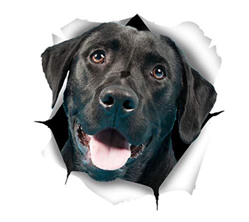 Top 9 Wandtattoo Hund Labrador – Bilder, Poster, Kunstdrucke & Skulpturen